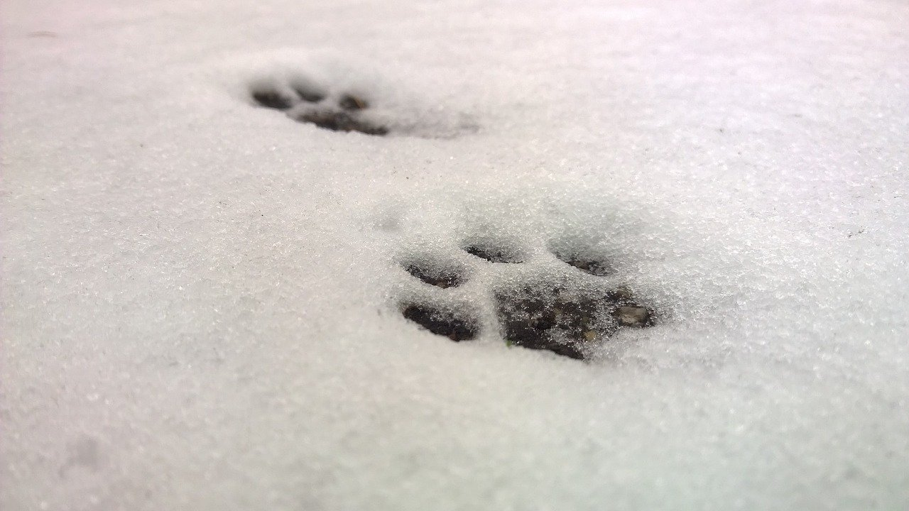 frozen pet paw prints