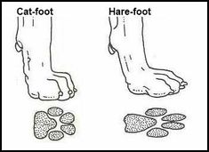 greyhound foot structure is hare foot